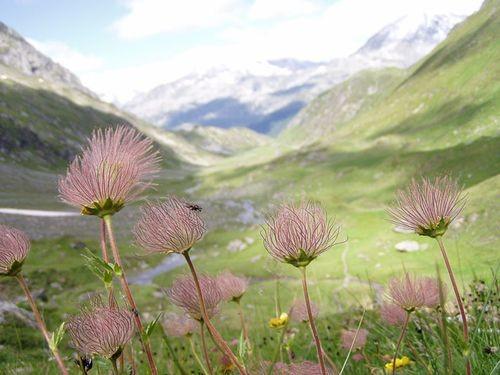 Wandern - Leidenschaft im Einklang mit der Natur