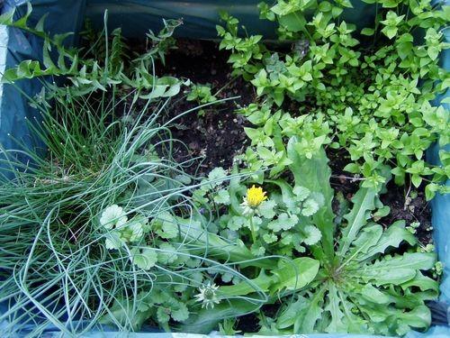 Sieht schön aus und tut gut – Ein Kräutergarten auf Balkonien